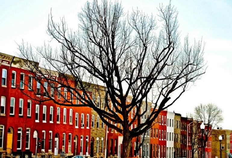 Image: Broadway -Tree- a landscape art photography by Kafi D'Ambrosi, one of Baltimore's celebrated photographer