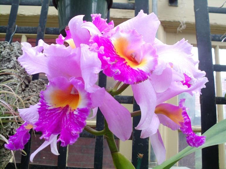 Artcentron Flowers We Love Photo Contest Returns Bigger
