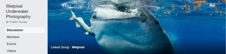 Image: Photograph of a whale on the banner of the Wetpixel Underwater Photography Group, one of the Facebook Photography Groups that provide Photography tutorials and photography tips for aspiring and amateur photographers